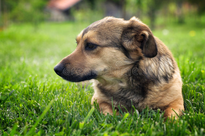 Download Dog in garden stock image. Image of mammal, green, meadow - 24633013