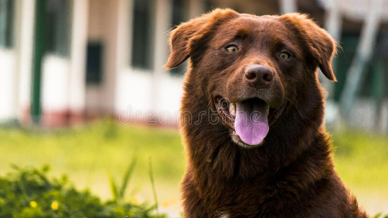 Dog in garden stock image