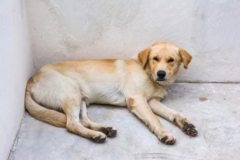 Dog get sick and sleepy at concrete corner. Background stock images