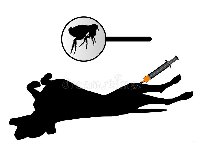 Download Dog Gets An Inoculation Against Fleas Stock Photo - Image: 10852310