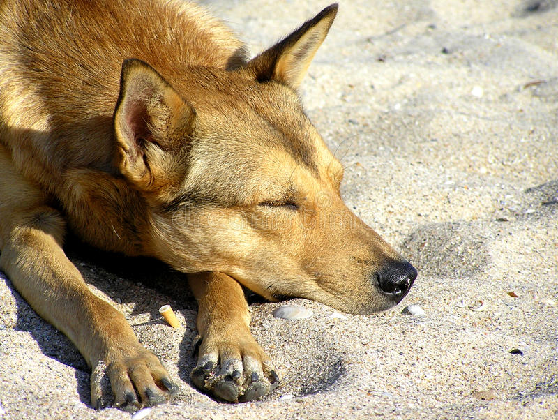 Dog getting rest on beach royalty free stock photography