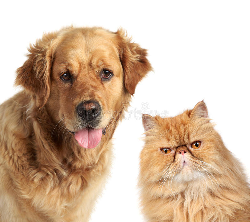 Download Dog and ginger cat stock image. Image of charming, gold - 21267957