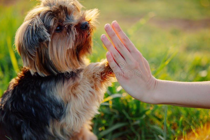 Dog gives paw royalty free stock photography