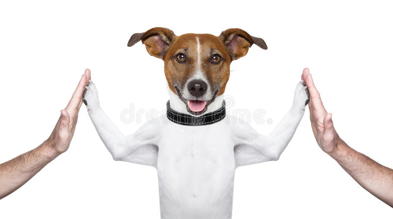 Dog high five royalty free stock photography