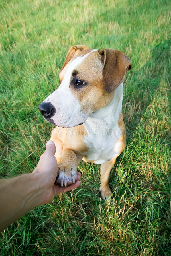 Dog giving paw royalty free stock image