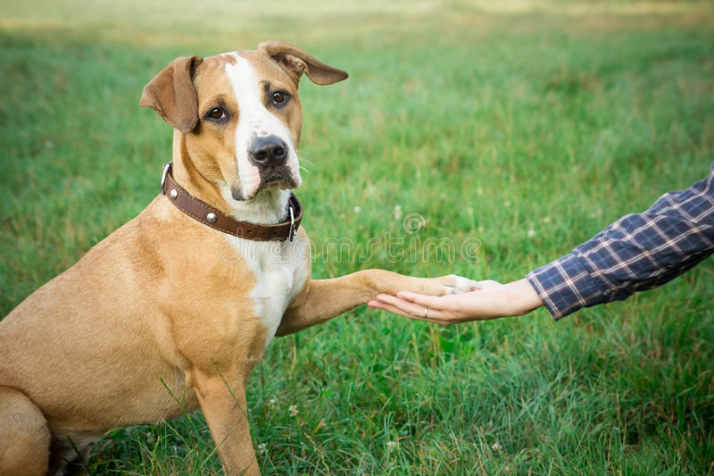 Dog giving paw stock images