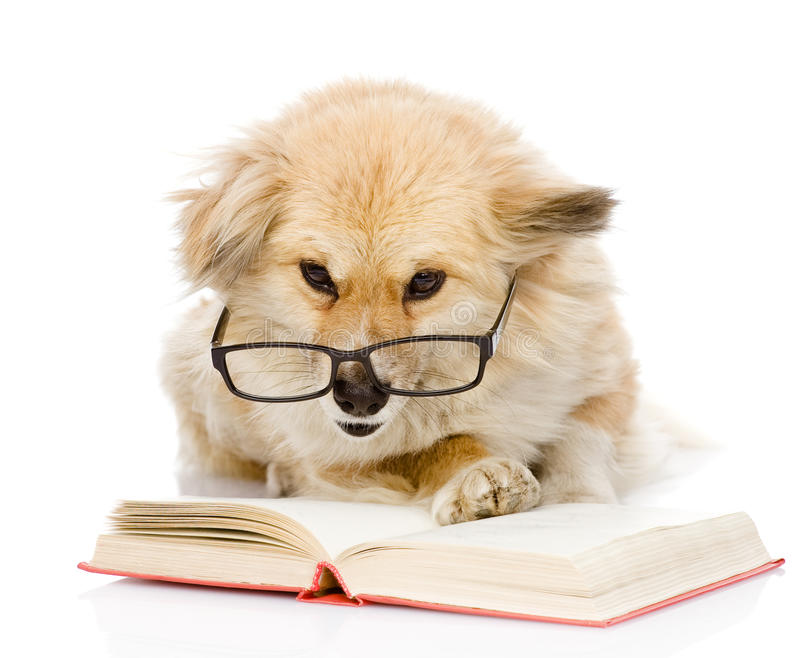 Dog in glasses read book. royalty free stock photos