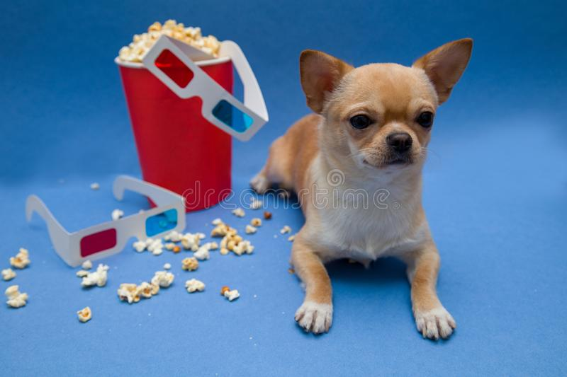 The dog with the glasses to view the stereo movies royalty free stock image