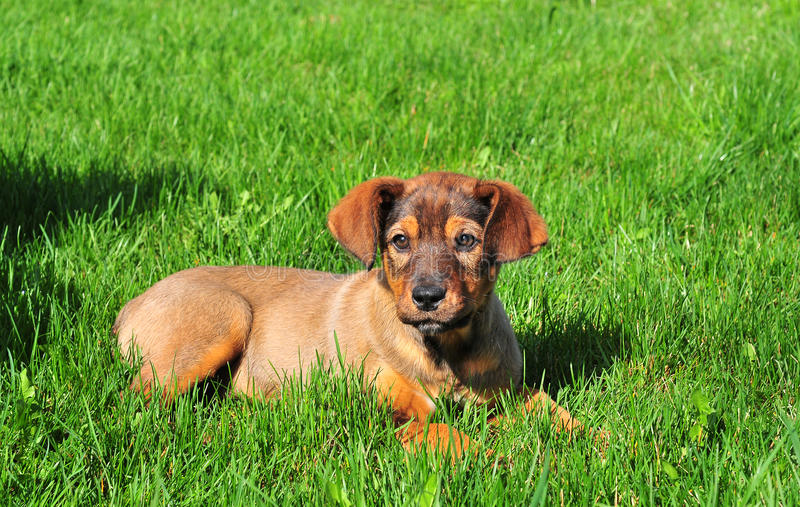 Download Dog in the grass stock photo. Image of green, hunting - 19308316