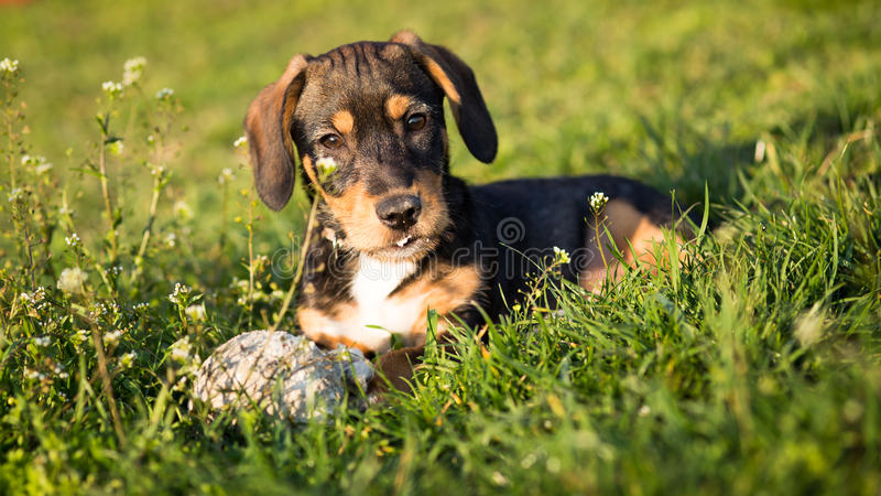 Dog in the grass stock photo