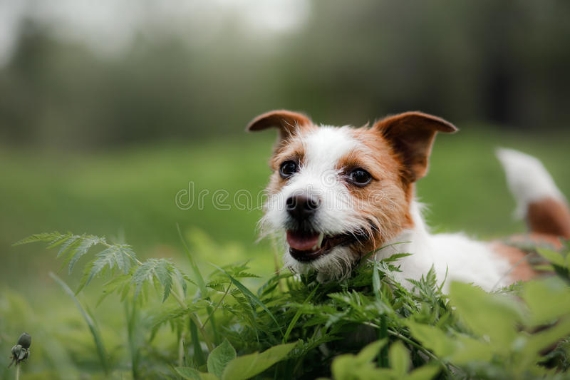 Dog in the grass royalty free stock images