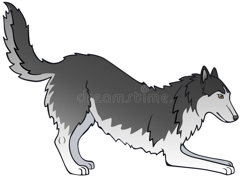 The dog is gray. Siberian Husky. Playful dog. Wags his tail vector illustration