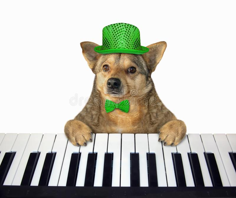 Dog in a green hat plays the piano stock photos