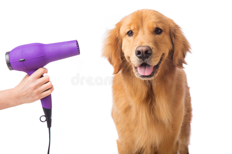 Dog Groomer stock images