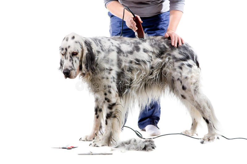 Download Dog grooming stock image. Image of background, professional - 13628963