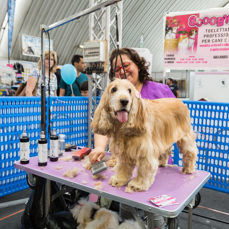 Dog grooming at Quattrozampeinfiera in Milan, Italy royalty free stock photos