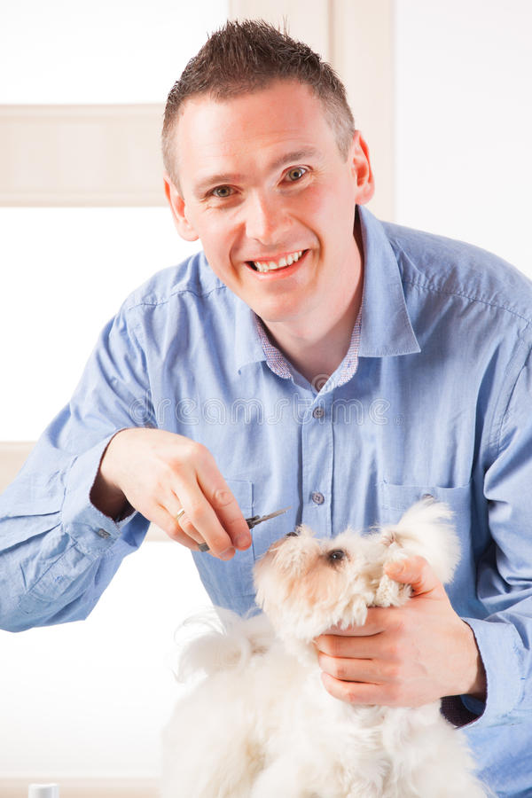 Download Dog grooming stock photo. Image of care, lifestyle, beauty - 30619318