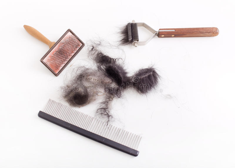 Dog grooming tools royalty free stock photography
