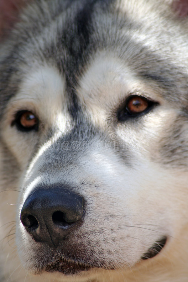 Dog guard royalty free stock image