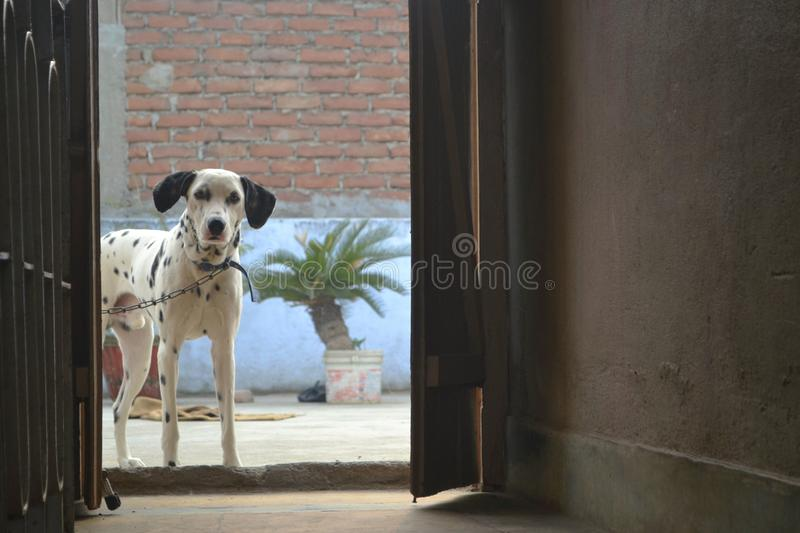 DOG Guard. royalty free stock images