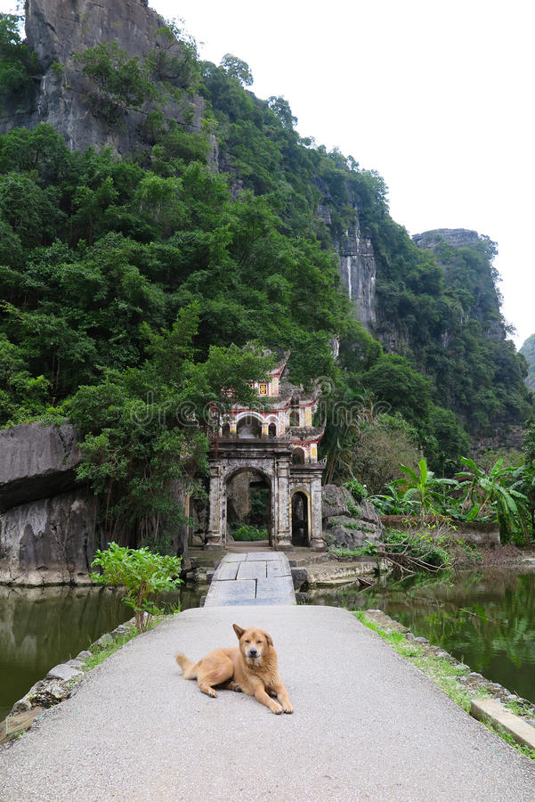A dog guarding the entrance to a temple, Ninh Binh Province, Northern Vietnam. A dog is guarding the entrance to the buddhist temple. Northern Vietnam, Ninh Binh stock image