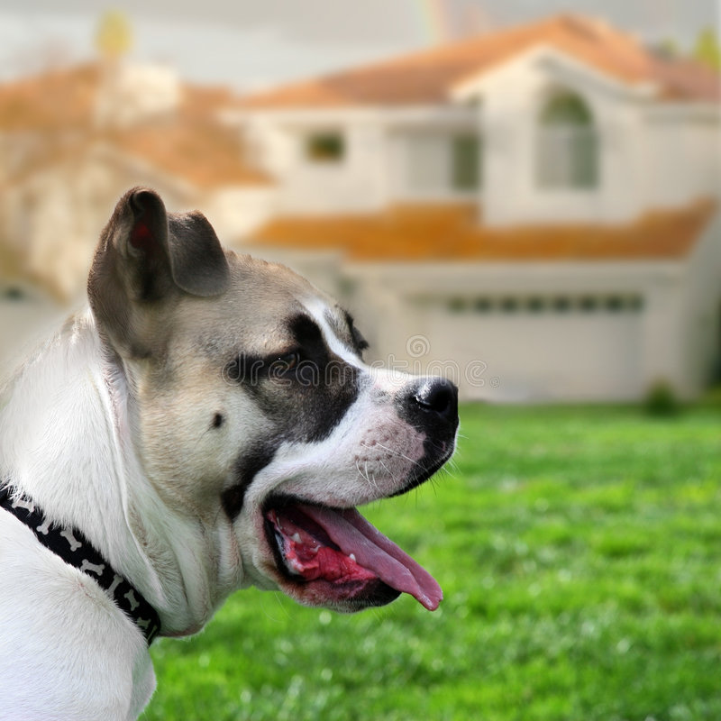 Dog guarding the house royalty free stock photo