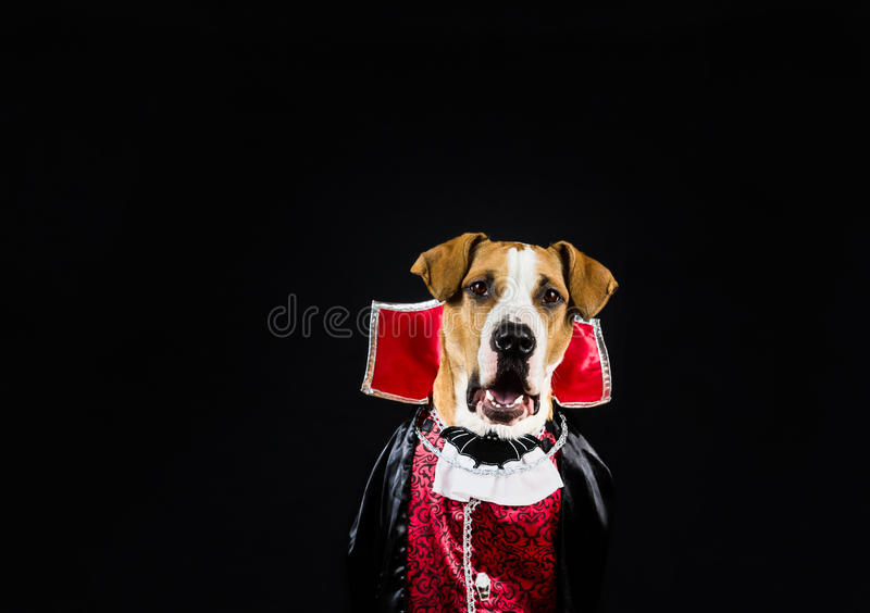 Dog in halloween costume stock image