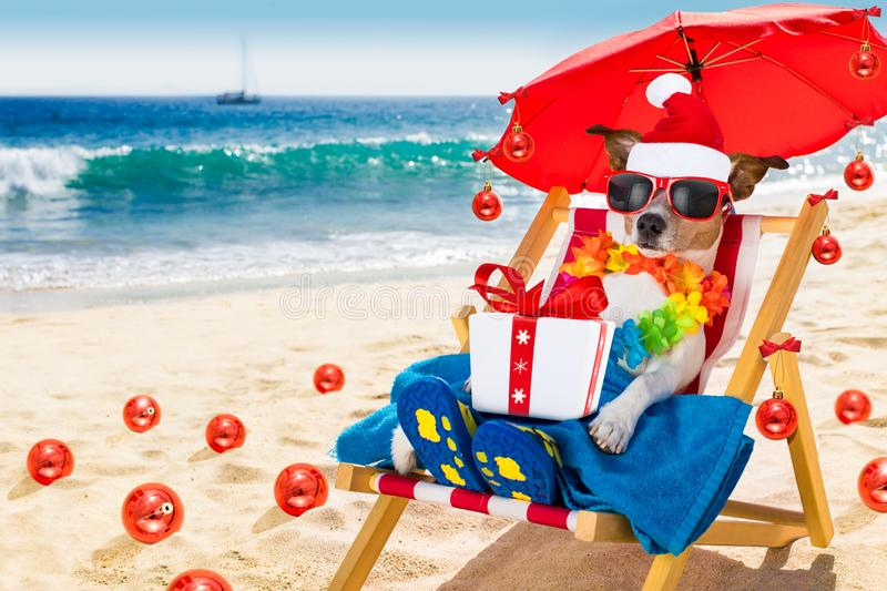 Dog in hammock as santa claus on christmas at the beach royalty free stock photos