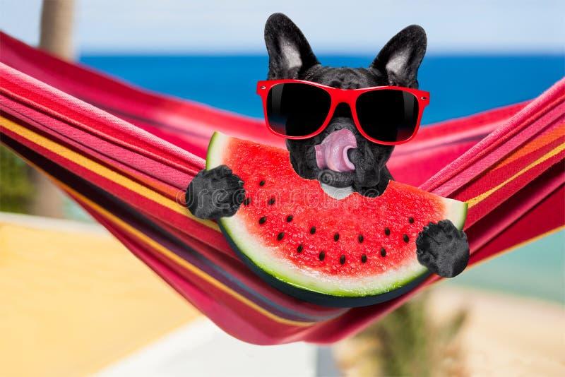 Dog on hammock stock photos