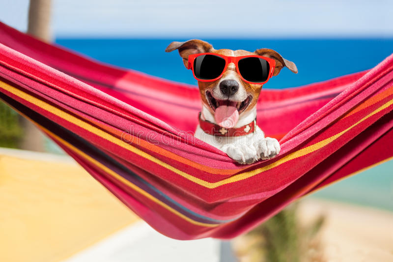 Dog on hammock. Dog relaxing on a fancy red hammock with sunglasses