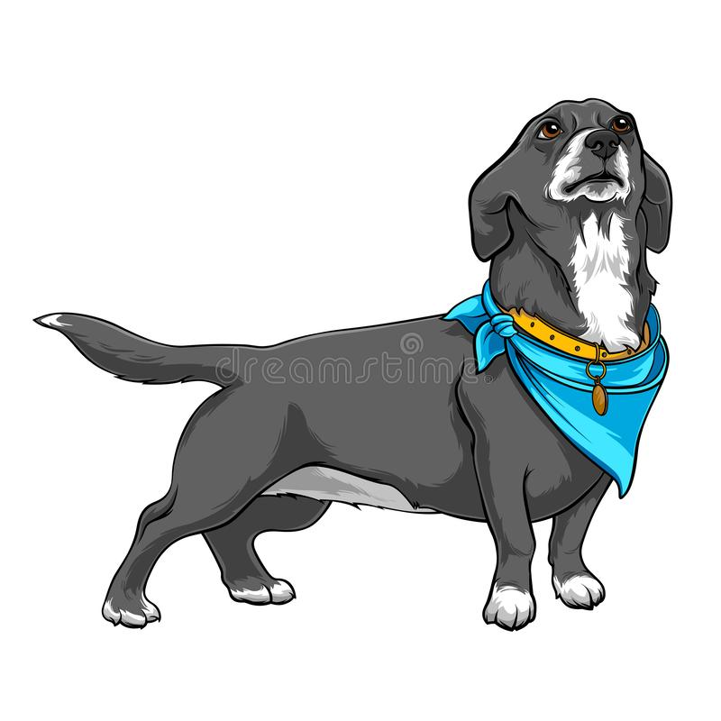 Dog with a handkerchief on the neck. Dog with a collar. A devoted dog looks up at the host. Contour Illustration. Dog with a blue handkerchief on the neck. Dog stock illustration