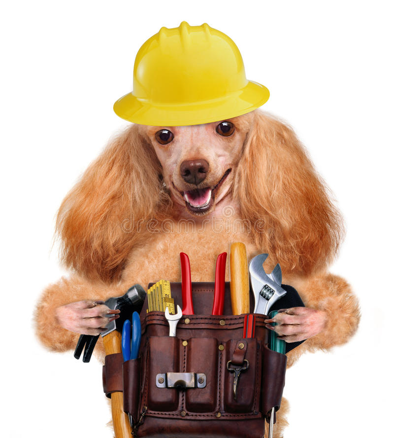 Handyman Dog Stock Photo. Image Of Improvement, Isolated