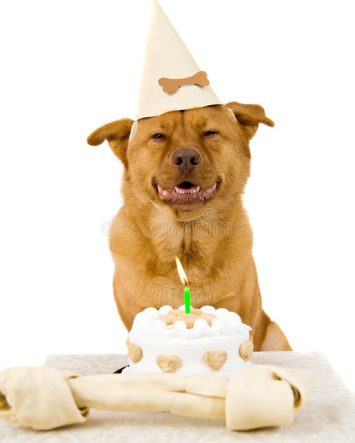 Free Dog Happy Birthday Stock Photography - 3277402