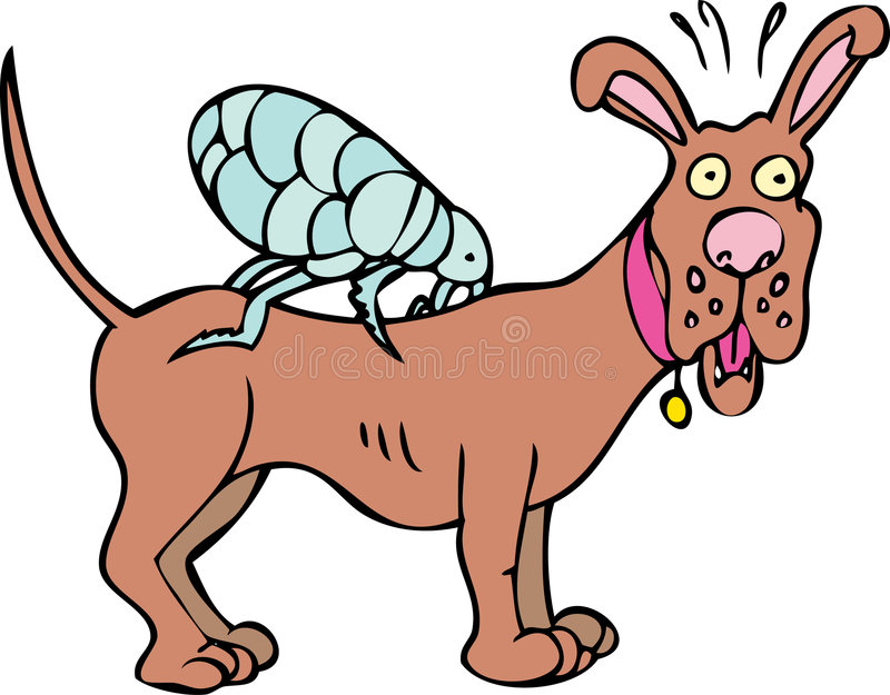 Dog has Fleas vector illustration