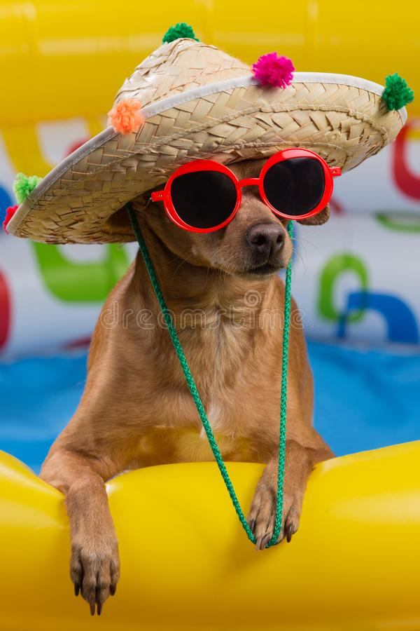 Dog in hat and glasses in a bright inflatable pool, concept of vacation and tourism, close-up of shooting stock photography