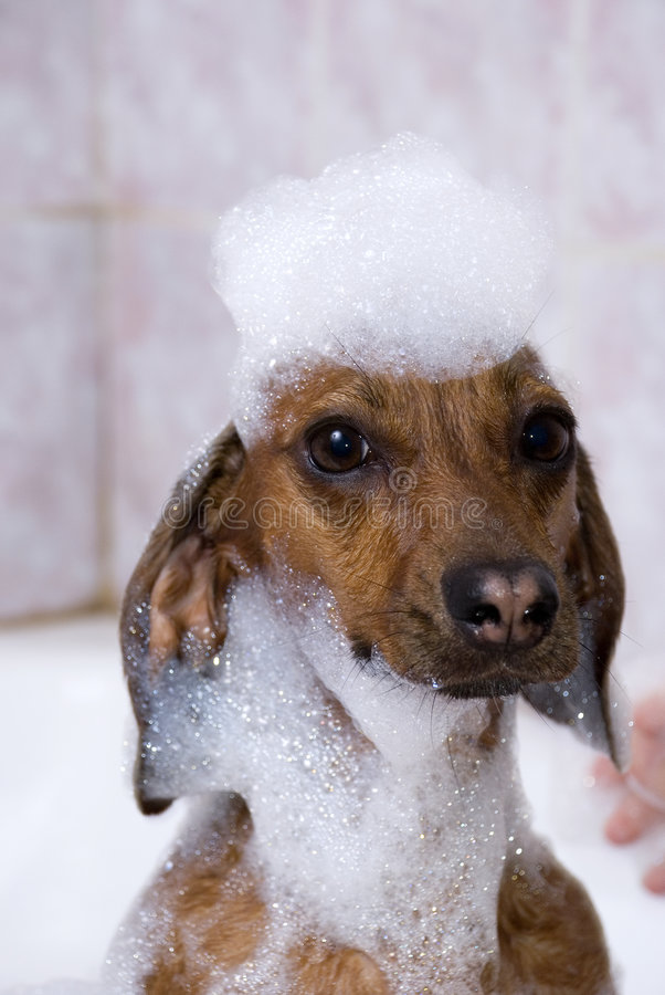 The dog have a bath royalty free stock photography