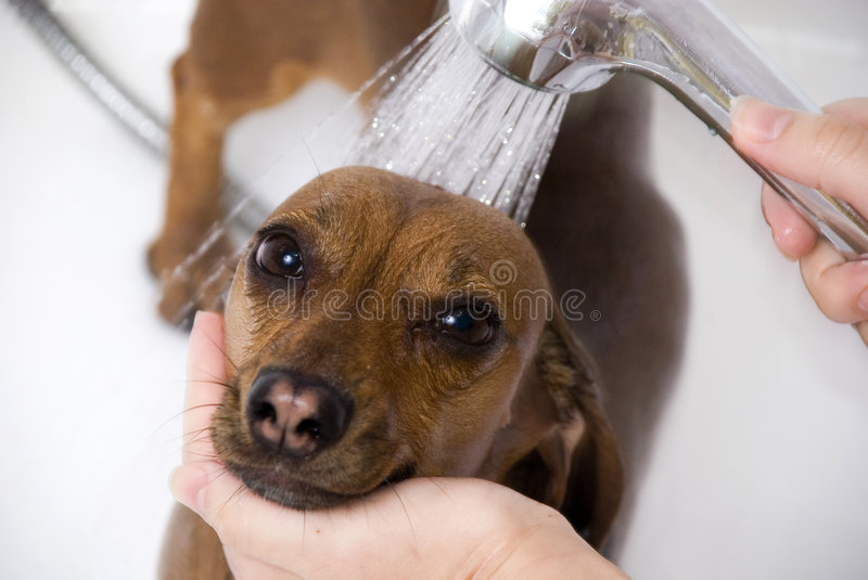 The dog have a bath royalty free stock image