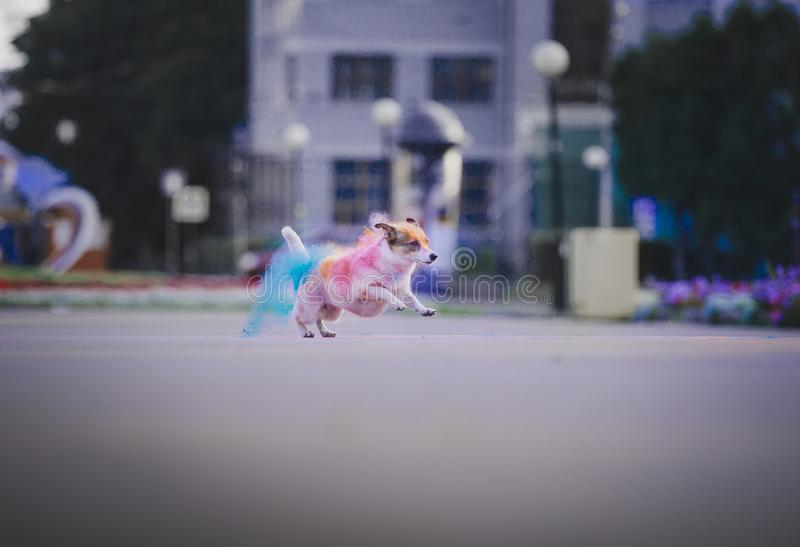 A dog having fun with paints of holi stock photography