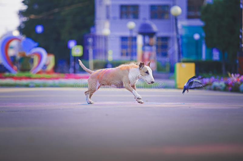 A dog having fun with paints of holi stock image