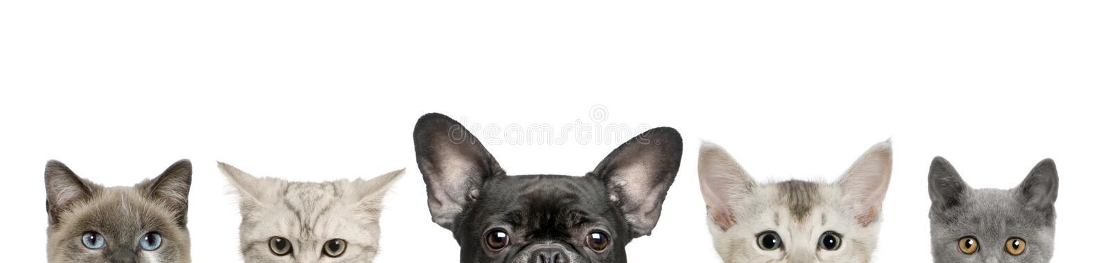 Dog head and cat heads royalty free stock images