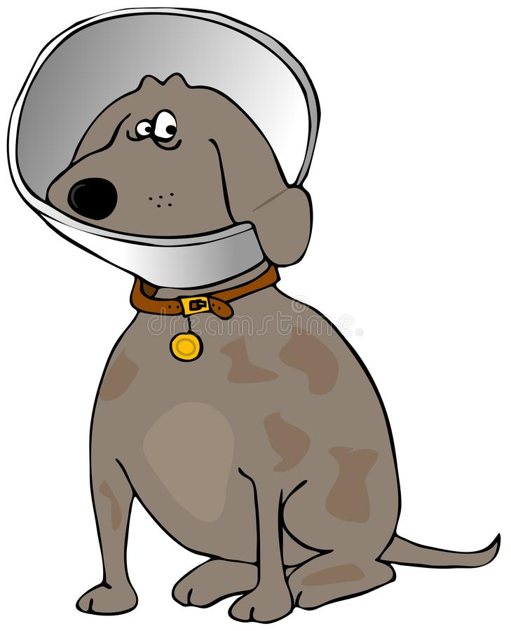 Download Dog with a head cone stock illustration. Illustration of protect - 35150649