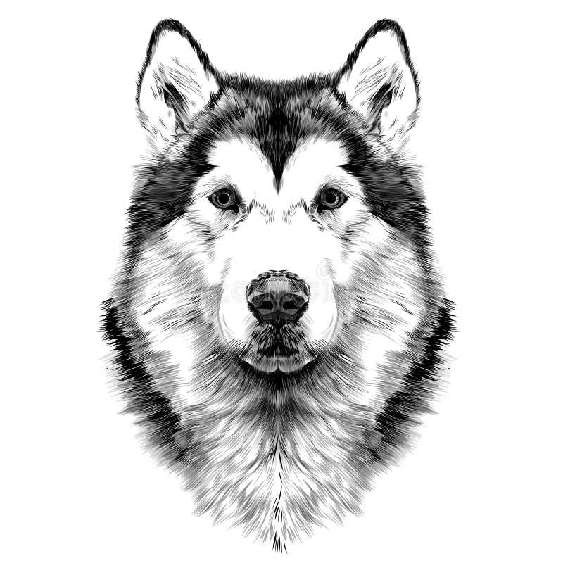 Dog head symmetry sketch vector graphics. Dog breed Alaskan Malamute head symmetry looks right sketch vector graphics color picture stock illustration