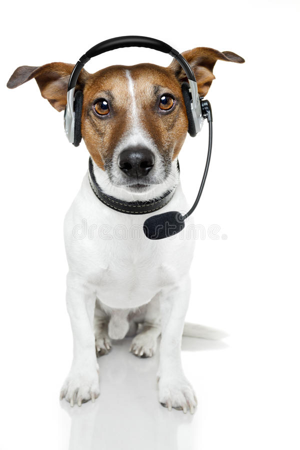 Dog with headset. Starring at us