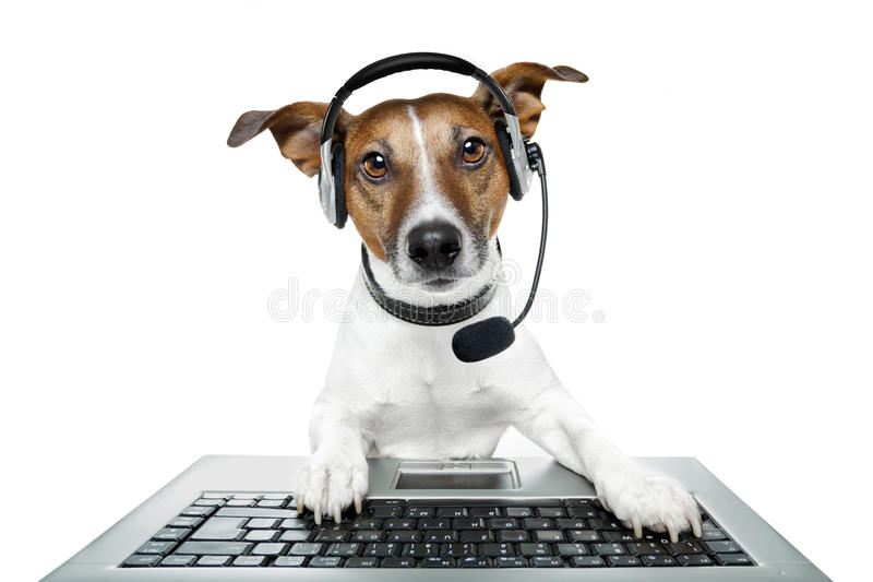 Dog with headset. A dog with headset an a computer