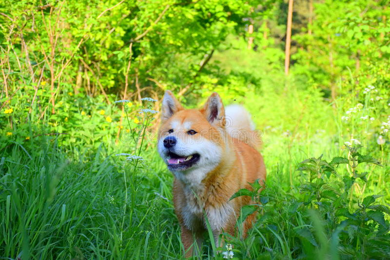 Dog hidding stock photo