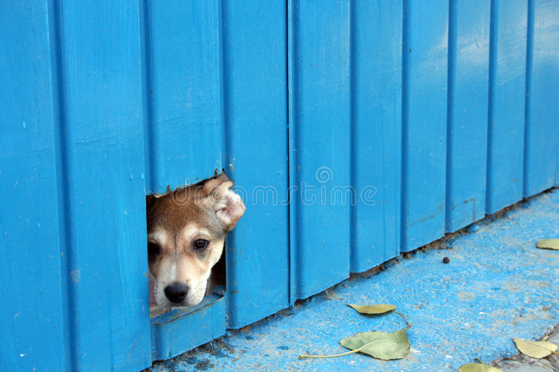 Download Dog hiding stock image. Image of doggie, hole, little - 4072079