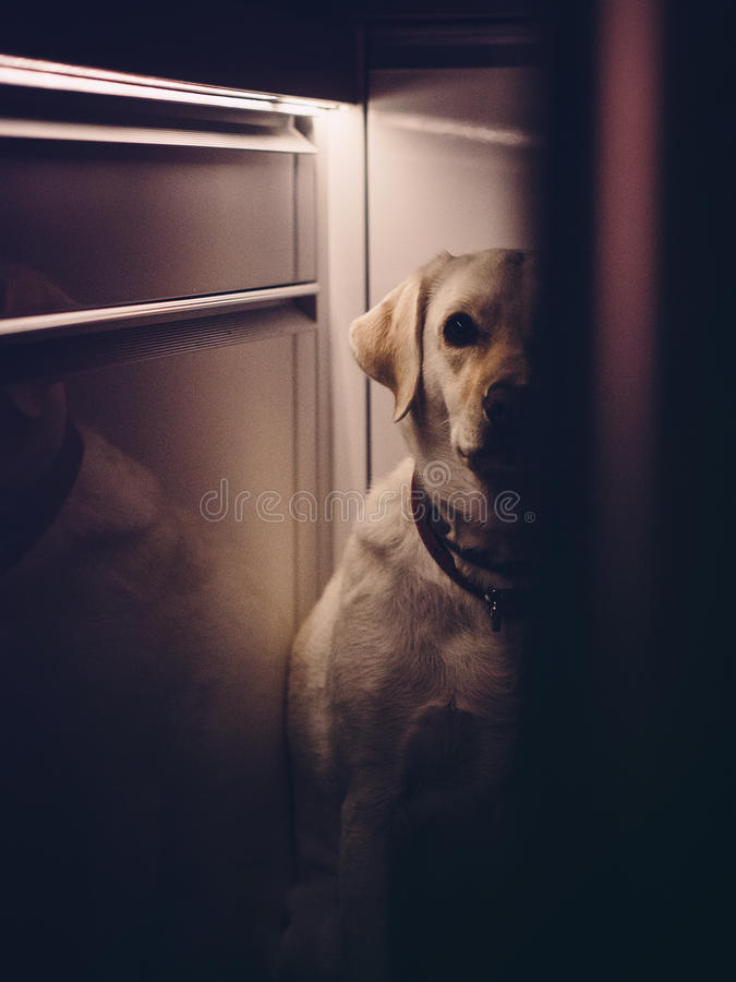 Dog hiding in a house royalty free stock photography