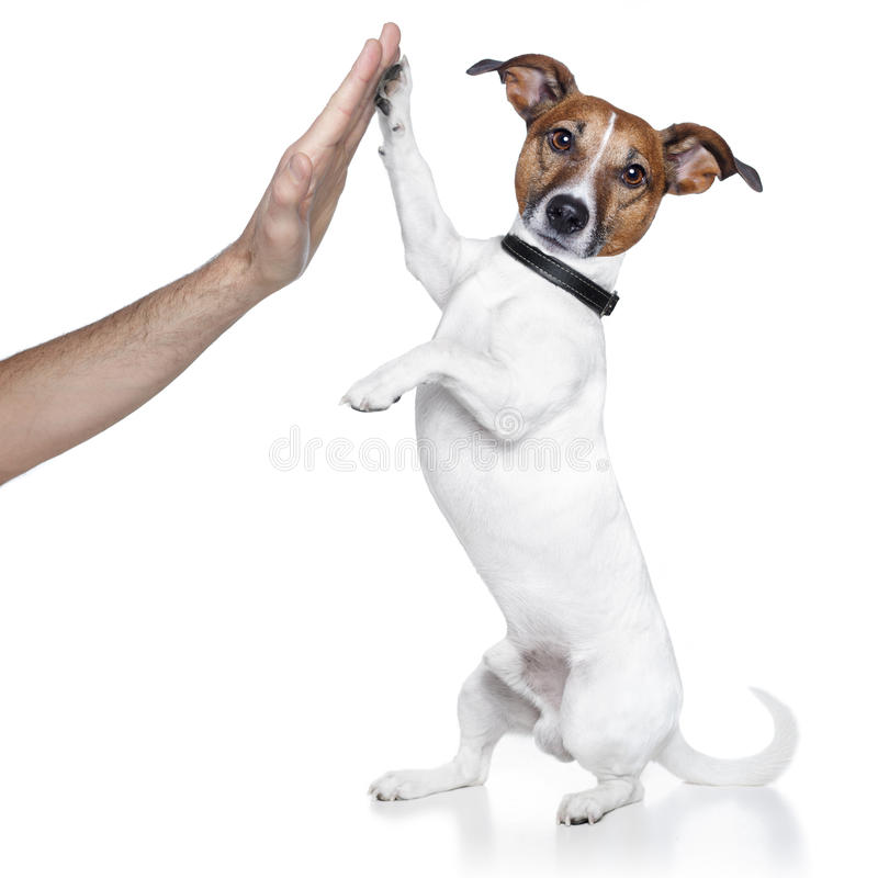 Dog high five stock image
