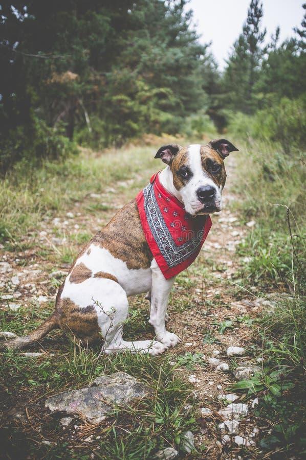 Dog hiker #3 stock images