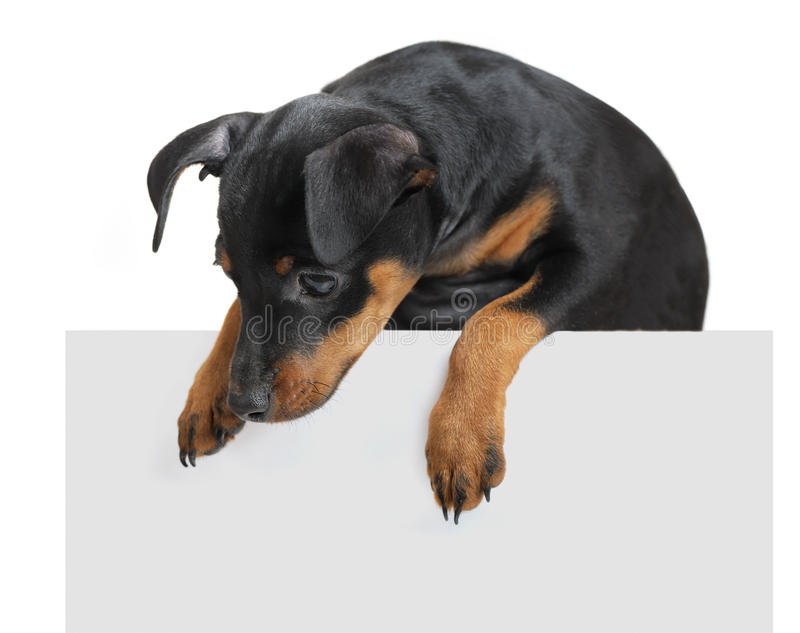 Download Dog hold empty pape stock photo. Image of adorable, beautiful - 28144098